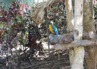 Macaw Bird in Roatan, Honduras