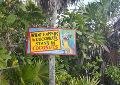 Coconuts Cozumel