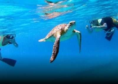 Snorkeling in Turtle Island St. Thomas - Norwegian Escape Cruise